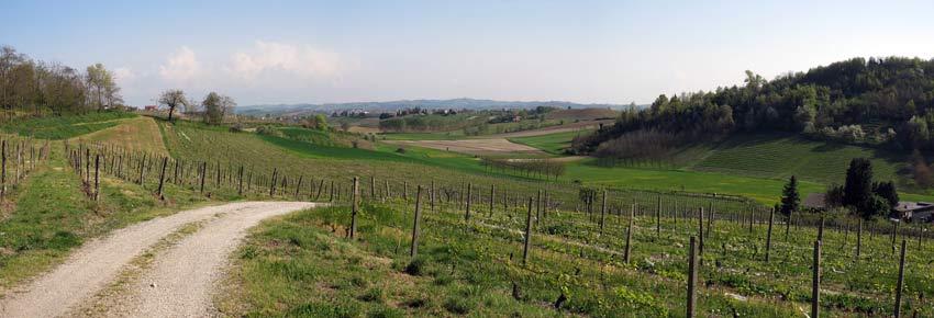 Strada bianca in collina nel Monferrato