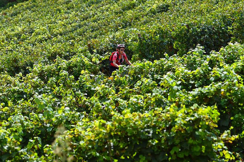 In bicicletta tra le vigne del Monferrato