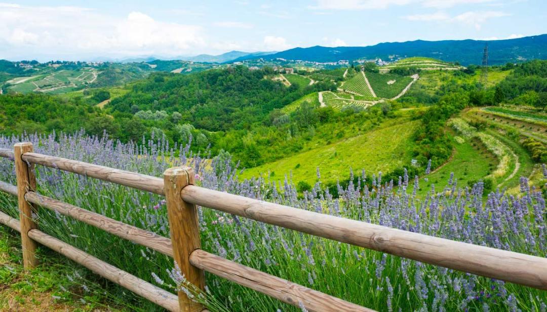 Rose al posto dei lucchetti: il belvedere più romantico del mondo è in Monferrato